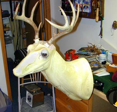 Image Gallery Taxidermy Supplies